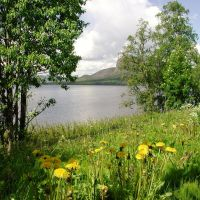 Løvetann ved Sjulsjøen og Fågelberget, Боде