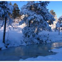 Vinterskog 1. Norway., Молде