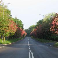 Street in flowers, Болеславец