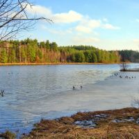 Zalew Klików -kaczki na lodowisku, Желеня-Гора