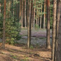 Las i  wrzosy, Желеня-Гора