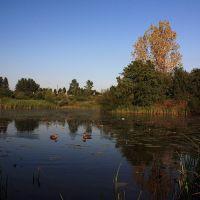 Gdzie kaczki mieszkają (Kąpielisko Kormoran), Легница