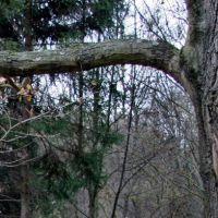 Wąż żygacz, Полковице