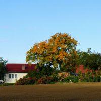 Wielka Nieszawka - Autumns Colors, Грудзядзь