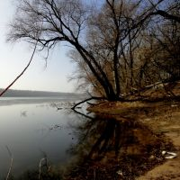 Port Wood in Torun / Port Drzewny w Toruniu, Грудзядзь