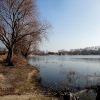Port Wood in Torun / Port Drzewny w Toruniu, Свечье