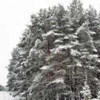 Winter Landscape - Mostki, Заган