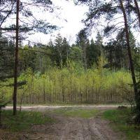 Droga leśna, Заган