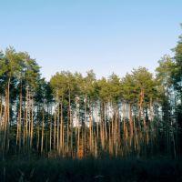 Las w okolicy Mostek, Зары