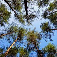 W lesie, Зелона-Гора