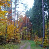 Las jesienią, Зелона-Гора