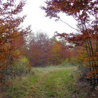 Jesień, Зелона-Гора
