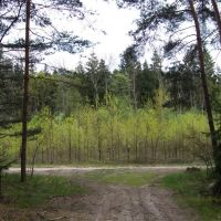 Droga leśna, Зелона-Гора