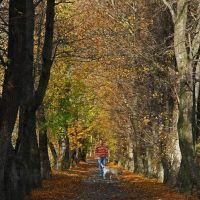 Jesień w parku, Gorlice, Polska, Горлице