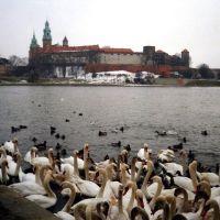 Kraków - Zamek Królewski na Wawelu przez rzekę Wisłę (královský hrad Wawel za řekou Vislou; Wawel Royal Castle across the river Wisla), Poland, Краков (обс. ул. Коперника)