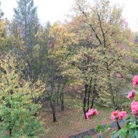 Oświęcim ul.Staszica park jesienią widok z balkonu, Освецим