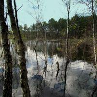 """Kobyłka,rezerwat przyrody,,GRABICZ"""" 20-VIII-2011r., Воломин"""