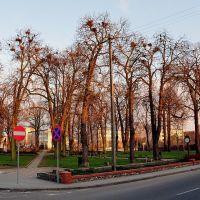 Historyczne drzewa :((( /zk, Гостынин
