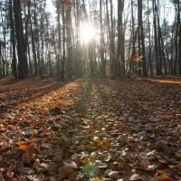 późna jesień - Święto Zmarłych, Млава