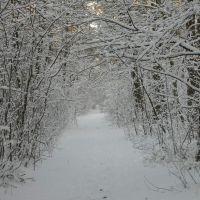 Zima w lesie, Млава