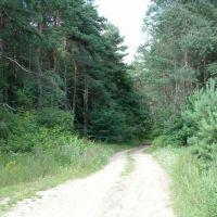 Tej drogi już nie ma.. (ul. leśniczówka - teraz Al. Marszałkowska), Млава