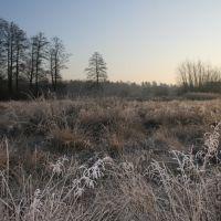 winter meadow (zimowa łąka), Остров-Мазовецки