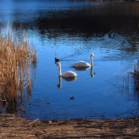 A pond, Пионки