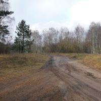Skrzyżowanie leśnych dróg - północ/north, Пионки