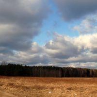 Las w okolicach Marek, Плонск