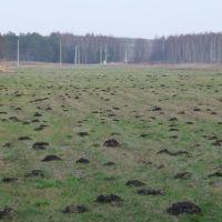 Nieużytki - wschód/east, Прушков