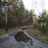 Skrzyżowanie leśnych dróg - północ/north, Прушков