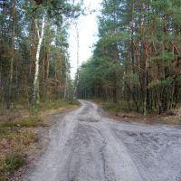 Skrzyżowanie leśnych dróg - północny wschód/north east, Пьястов