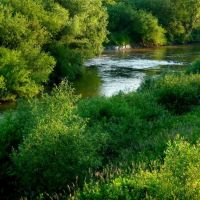 rzeka Wisłoka ,okolice Mielca, Мелец