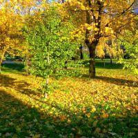 Jesień na ul.Kocjana,Mielec, Мелец