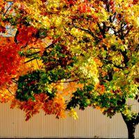 jesień-słońce-klon, Мелец