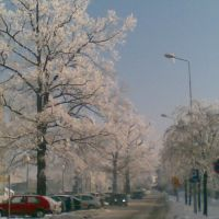 Ośnieżone drzewa przed szpitalem, Тарнобржег