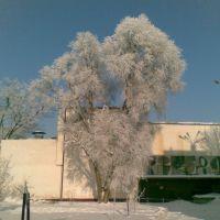 Dom Kultury i ośnieżone drzewa, Тарнобржег