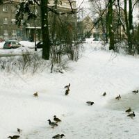 Kaczki na rzece Białej, Белосток