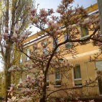 magnolia za Starostwem w Wejherowie, Вейхерово
