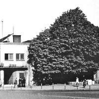 KINO WISLA - 1965, Тчев