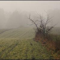 GLIWICE. Mglisty poranek/Foggy morning, Гливице