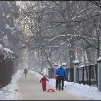 Alejka Sikornik/ Sikornik Alley, Гливице