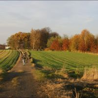 Gliwice. Pola za Sikornikiem/The fields behind Sikornik estate, Гливице