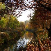 Amber autumn, Гливице