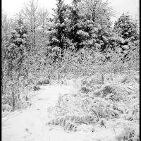 GLIWICE. Biały krajobraz/White landscape, Гливице