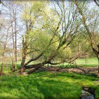 GLIWICE. Pamiętacie jeszcze wiosnę? (Kwiecień 2011)/Do you remember spring? (April 2011), Гливице