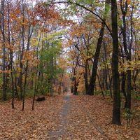 Jesienna droga w lasku bytkowskim, Даброваа-Горница