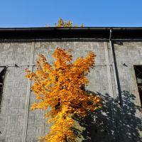 Autumn symmetry, Даброваа-Горница