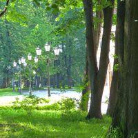 W żywieckim parku., Живец