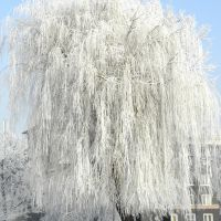 Winter hair ..., Пысковице